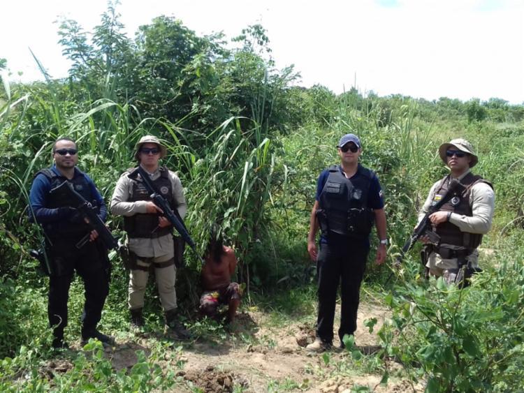 A droga era camuflada em plantação de mandioca e milho - Foto: Divulgação