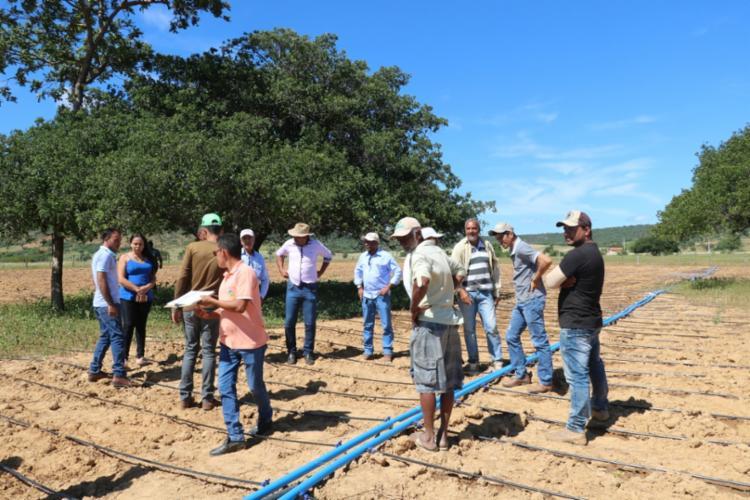 Foram doados mais 49 kits de irrigação por gotejamentos e suporte técnico para garantir o desenvolvimento da produção de algodão na região - Foto: Divulgação