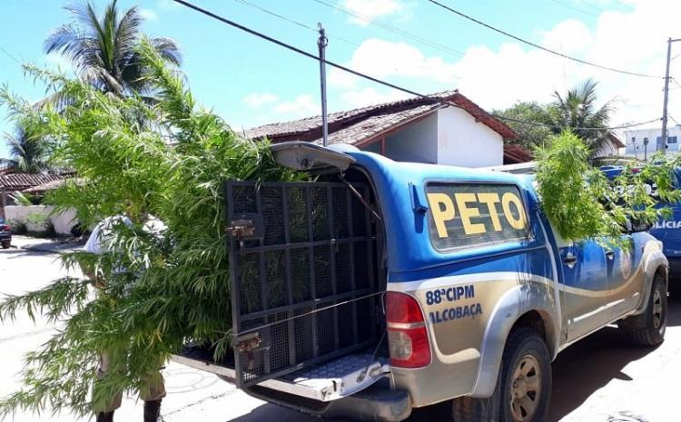 Um livro sobre o cultivo da erva também foi encontrado na residência. - Foto: Divulgação   Verdinho Notícias