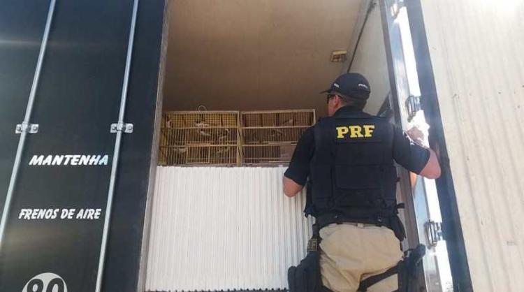 As aves estavam presas em quatro gaiolas sujas com fezes e aparentando estarem sendo submetidas a situação de maus-tratos - Foto: Divulgação | PRF