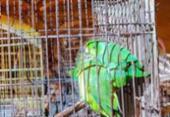 Aves silvestres são resgatadas de cativeiro em Cipó | Foto: PRF-BA