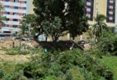 Moradores denunciam corte de árvores na região da av. Tancredo Neves | Foto: Shirley Stolze | Ag A TARDE