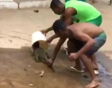 Animal foi capturado após a limpeza de um rio e levado para o Centro de Triagem para Animais Silvestres - Foto: Reprodução l Rede Bahia