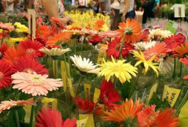 Feira em shopping de Salvador reúne diversidade de flores | Roberto Abreu l Divulgação