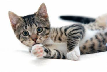 Hoje é o Dia Mundial do Gato; Confira algumas curiosidades sobre o animal | Freepik