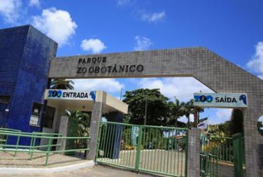 Zoológico de Salvador realiza inscrições para passeios noturnos | Joá Souza l Ag. A TARDE