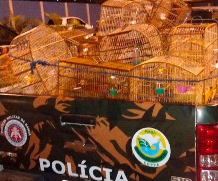 Animais foram encontrados dentro de gaiolas - Foto: Divulgação | PMBA