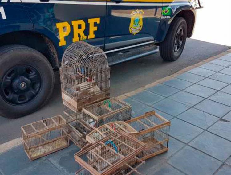 Aves foram encontradas presas em gaiolas de forma ilegal - Foto: Divulgação   PRF