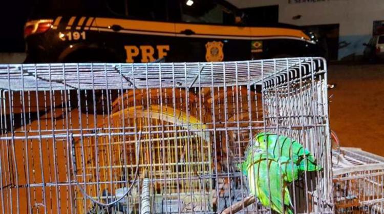 As aves foram encaminhadas à Secretaria do Meio Ambiente de Ribeira do Pombal - Foto: PRF-BA