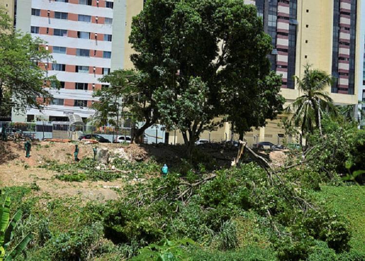 Moradores denunciam ação de operários cortando as árvores no local - Foto: Shirley Stolze | Ag A TARDE
