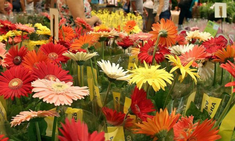 São opções como orquídeas, bonsais, suculentas, cactáceas, frutíferas, roseiras, entre outras - Foto: Roberto Abreu l Divulgação