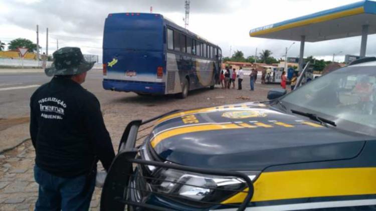Animais eram transportados no interior de alguns ônibus que seguiam para São Paulo - Foto: Divulgação | PRF