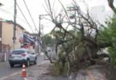 Árvore cai, atinge fiação e bloqueia faixa na Federação | Foto: Reprodução | TV Bahia