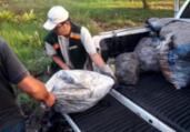 Mais de 5 toneladas de crustáceos são apreendidos | Divulgação | SSP-BA