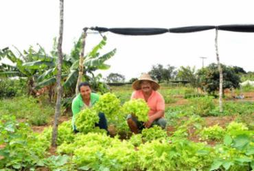 Agricultura familiar é contemplada com nova linha de crédito