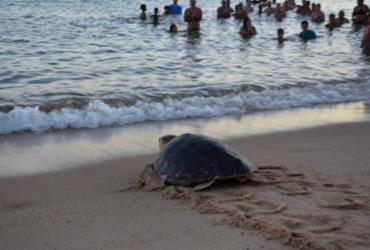 Soltura de tartaruga marinha marca evento da Reserva da Biosfera da Mata Atlântica