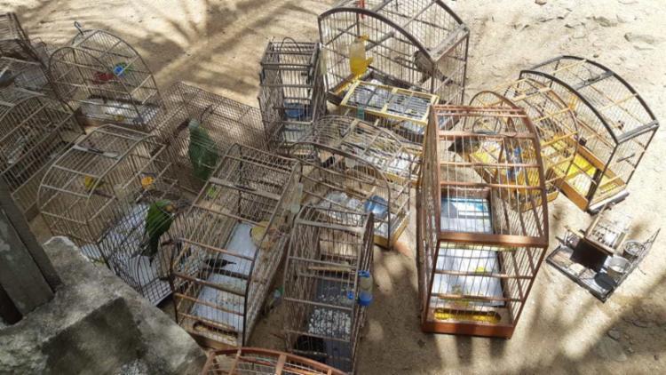 Pássaros foram resgatados em residências diferentes - Foto: Divulgação | PRF