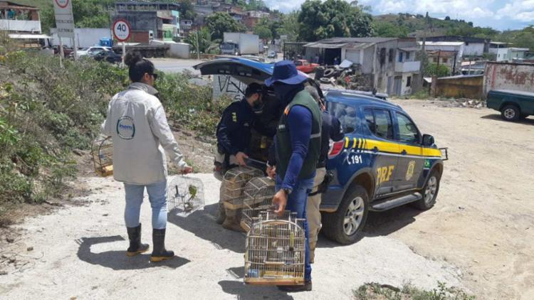 Ação conjunta tem o objetivo de coibir a criação ilegal de animais silvestres na Bahia