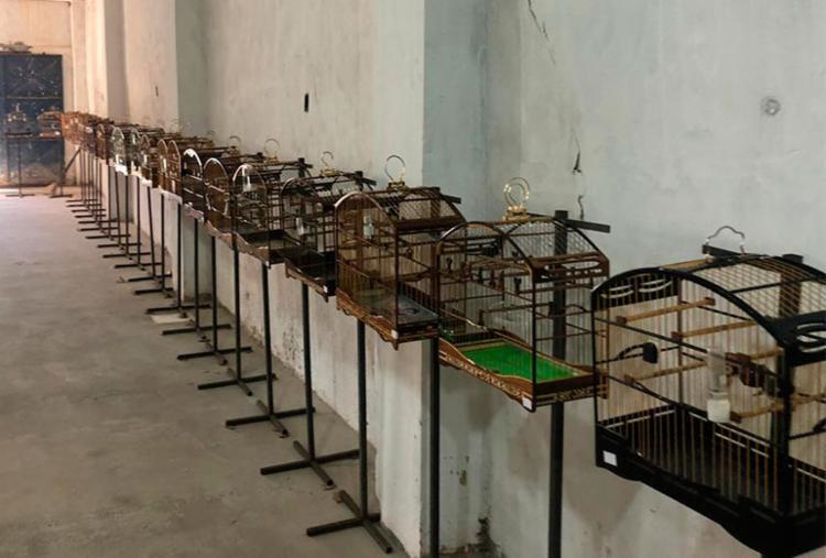 Animais foram encontrados em evento irregular - Foto: Divulgação | SSP-BA