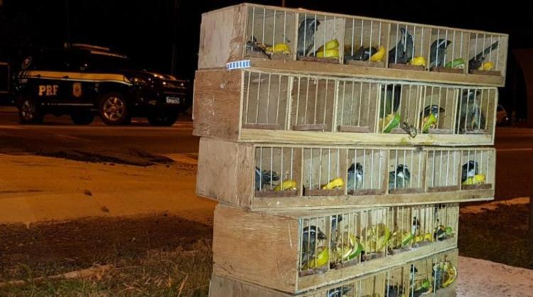 Os pássaros estavam escondidos no compartimento do tanque de combustível em um ônibus de turismo - Foto: Divulgação   PRF
