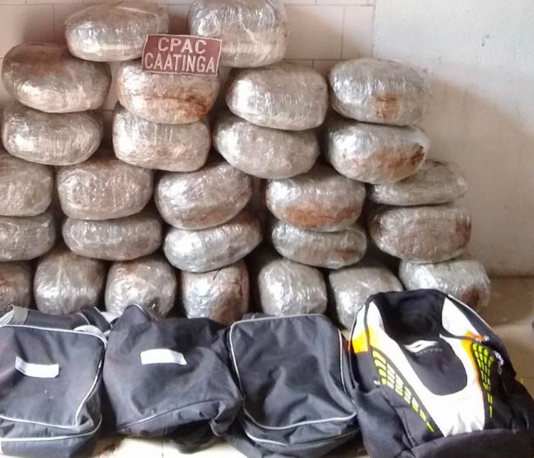 Drogas foram encaminhadas para a Delegacia Territorial de Chorrochó - Foto: Divulgação | SSP