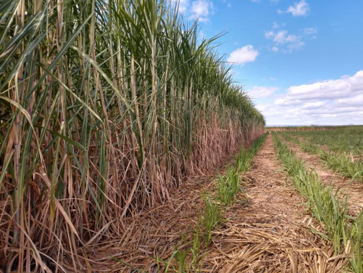 """João Leão: """"A grande produtividade baiana de cana-de-açúcar, de 320 a 350 toneladas por hectare, hoje é a maior do Brasil. Temos todo potencial e saímos na frente na atração de novas usinas"""" - Foto: Divulgação"""