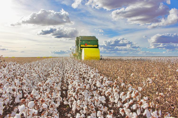 A previsão da ABAPA é que as máquinas estejam em operação para a colheita a partir do mês de junho - Foto: Divulgação/Abapa