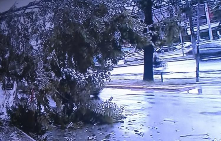Árvore caiu na avenida ACM