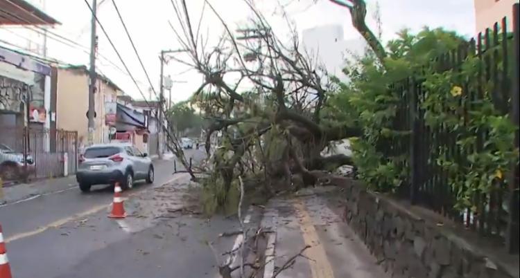 Árvore ocupa uma faixa no sentido Rio Vermelho - Foto: Reprodução | TV Bahia