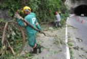 Árvore cai e bloqueia faixa da avenida Luís Eduardo Magalhães | Foto: Luciano da Matta | Ag. A TARDE