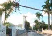 Coqueiro cai e fica pendurado em fiação em Boa Viagem | Foto: Reprodução | TV Bahia