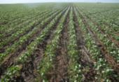 Soja, milho e algodão têm novos defensivos | Foto: Miriam Hermes | Ag. A TARDE