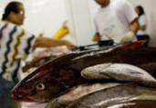 Veja pescados que você pode comer sem culpa ambiental   Raphael Müller   Ag. A TARDE