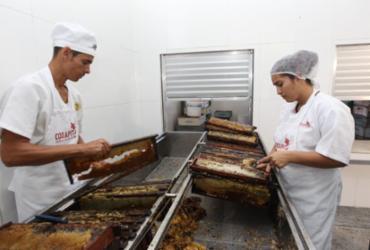 Cadeia do mel é fortalecida no Território do Sisal