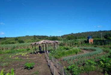 Agricultores familiares colhem resultados com produção agroecológica