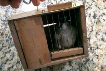 Seis aves silvestres são resgatadas em Camaçari | Divulgação | SSP-BA