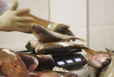 Com desconto de até 60%, peixes serão vendidos no Terminal da Ribeira   Carol Garcia   GOVBA