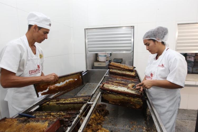 A cooperativa é considerada responsável pela maior parte da produção de mel do Território do Sisal - Foto: Divulgação