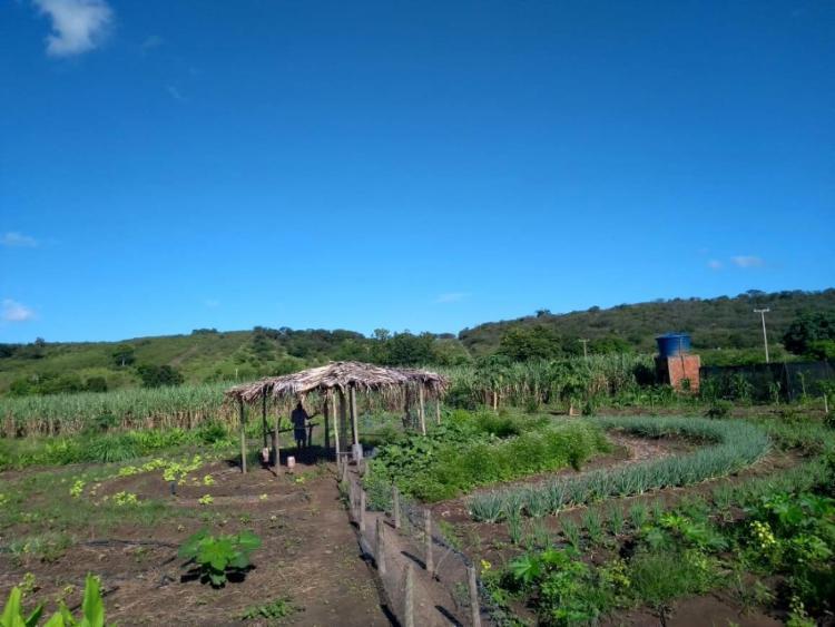 O projeto contempla a instalação de um galinheiro com área de pastagem e a aquisição de material de irrigação, matrizes de aves, mudas frutíferas, entre outros - Foto: Divulgação
