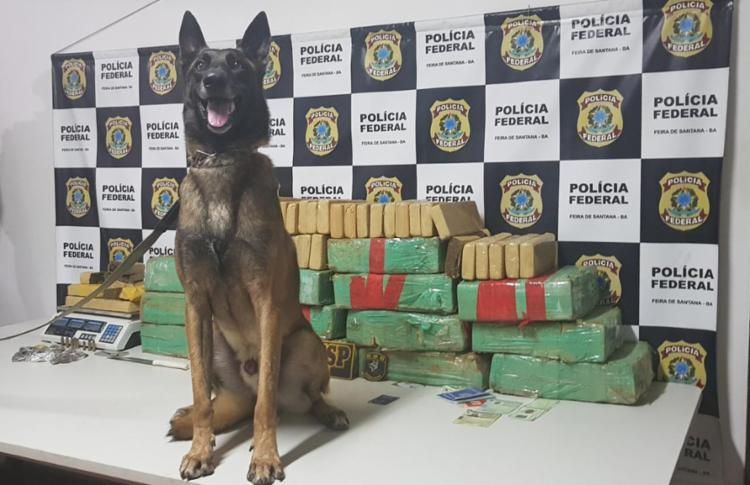 Cão farejador da PM localizou as drogas espalhadas pelos cômodos da casa - Foto: Divulgação | SSP-BA