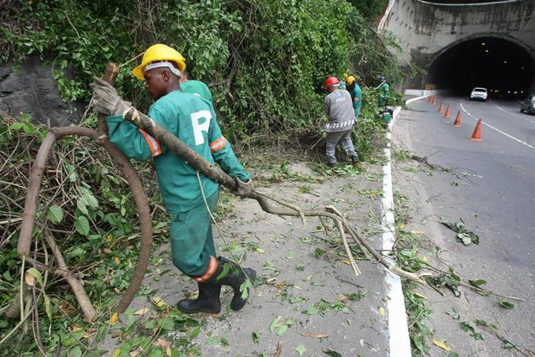 Técnicos da Seman retiraram a árvore do local - Foto: Luciano da Matta   Ag. A TARDE
