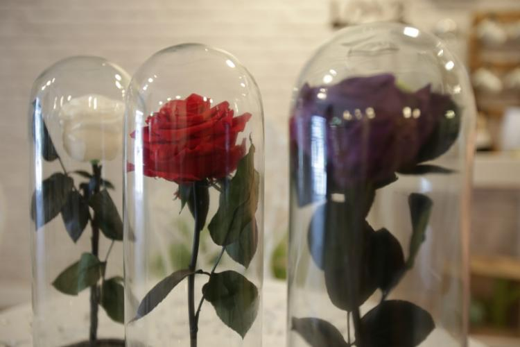 A Rosa Eterna pode durar até dois anos e vem numa redoma, como a do filme A Bela e a Fera