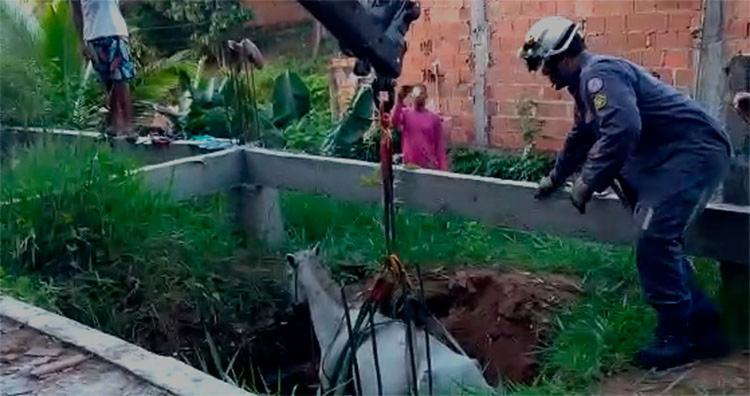 Após resgate,o animal foi entregue ao proprietário para que pudesse ser avaliado por um veterinário - Foto: Divulgação | SSP