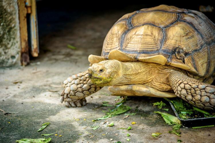 Talvez ainda dê tempo de salvar as tartarugas, se não demorarmos a seguir o Parlamento europeu - Foto: Pasuk Lertbuaban | Divulgação