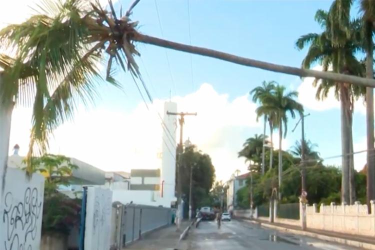 Coqueiro ficou pendurado em fios de poste - Foto: Reprodução   TV Bahia