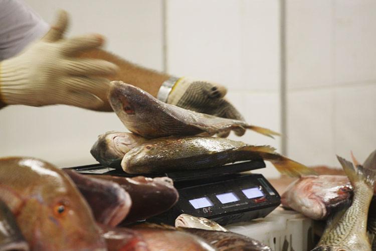 Cada pessoa poderá comprar até quatro quilos de produto - Foto: Carol Garcia   GOVBA
