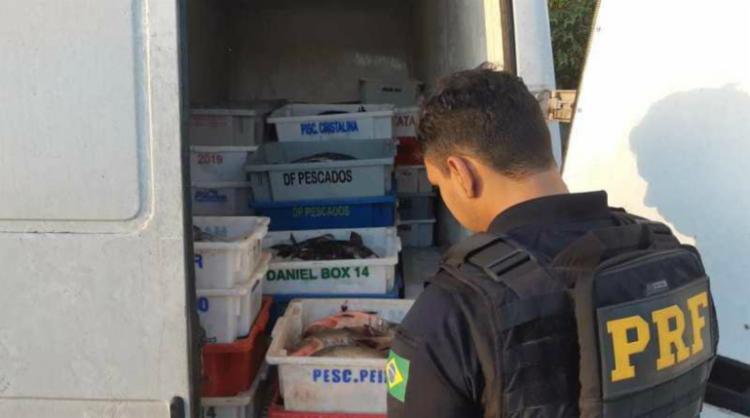 Eram transportados peixes do tipo Tambaqui e Pintado - Foto: Divulgação   PRF-BA