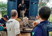 Suspeito de crime ambiental em Jacobina tem fiança estipulada em R$ 100 mil | Foto: Divulgação | FPI