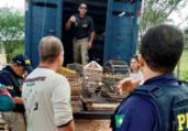 Suspeito de crime ambiental tem fiança em R$ 100 mil   Divulgação   FPI