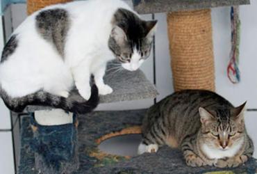 Projeto de assistência a animais de rua é aprovado pela Câmara Municipal | Luciano da Matta | Ag. A TARDE